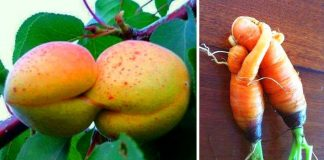 Alive Fruits and Vegetables